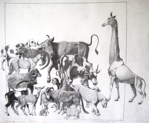 Szunyoghy, András: Animals