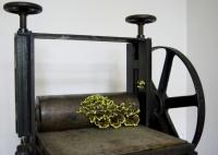 Szenteleki, Gábor: Printing press mushroom