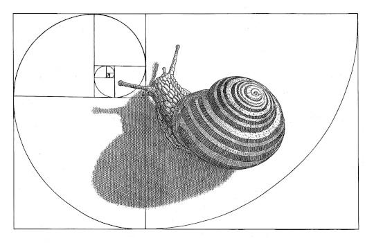 Orosz, István: The snail