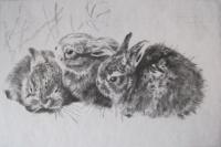 Csergezán, Pál: Rabbits