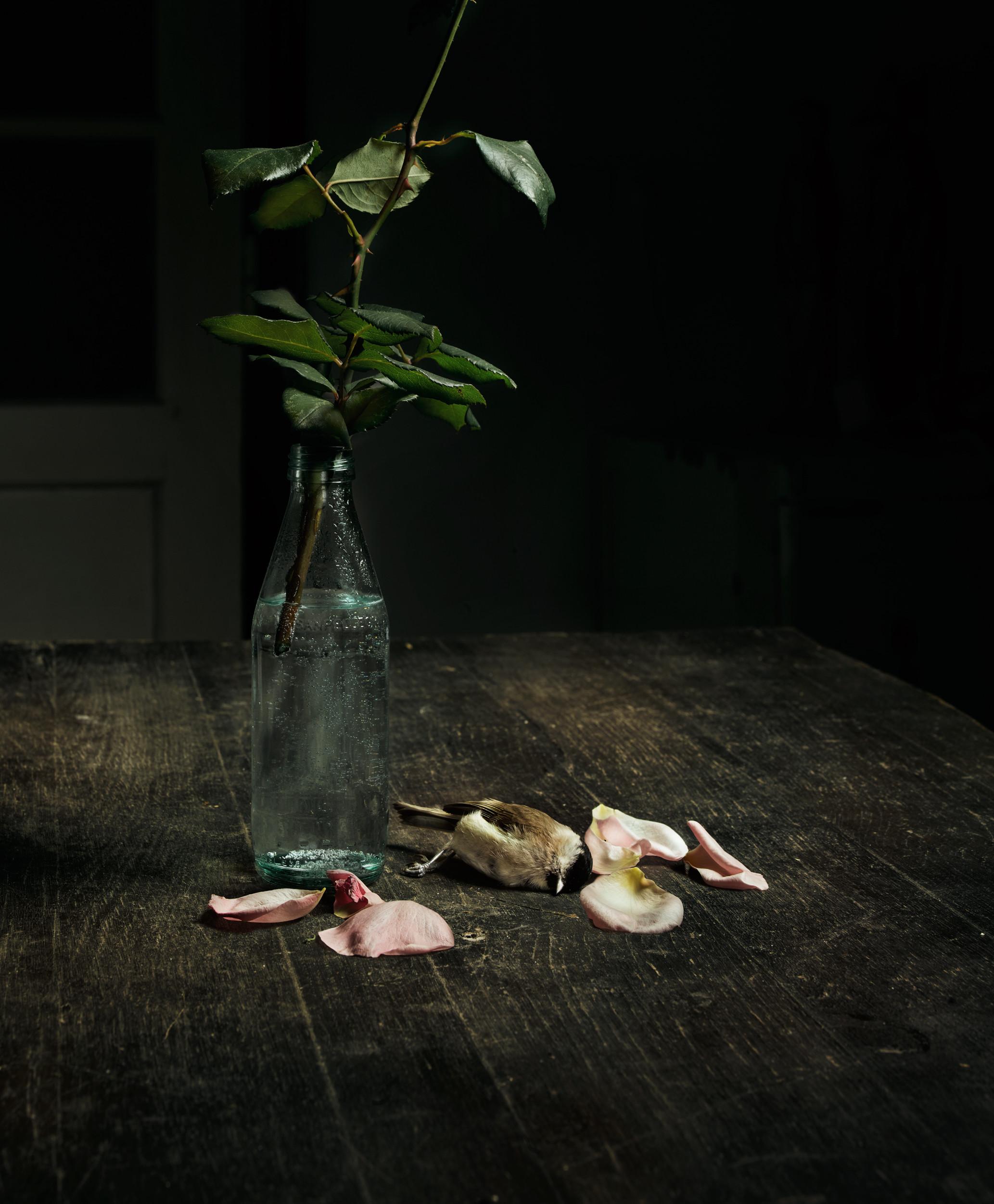 Mészáros László: Halott madár