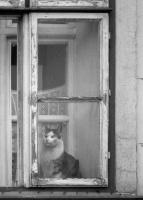 Chocol Károly: In the window